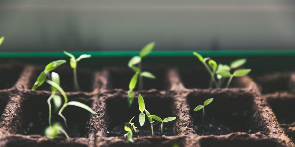 the best organic fertilizer on the market today and how to diy